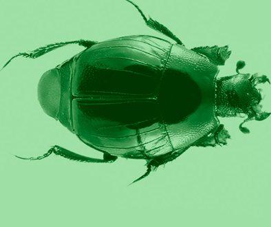 tax-destaca-coleoptera-jul2020-2