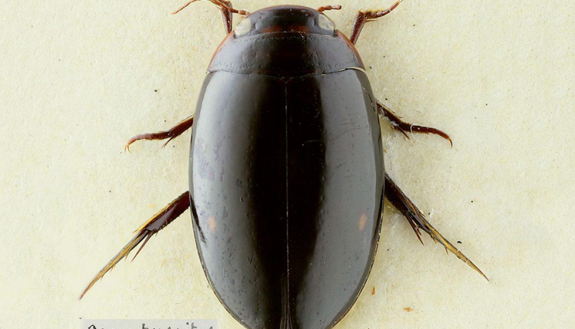 destaca-genus-dic2020