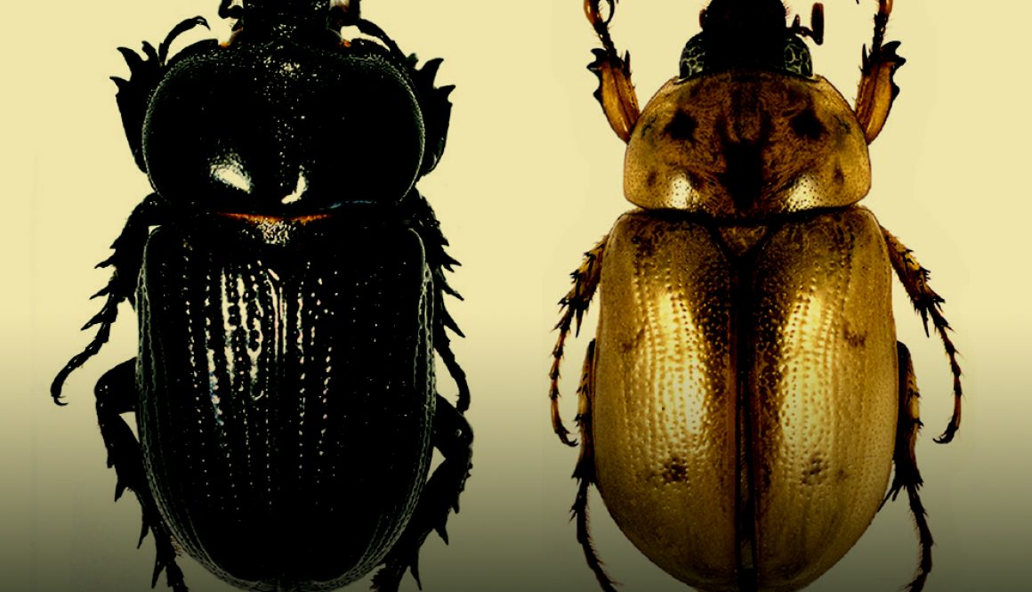 07destaca-escarabajos-ene2021