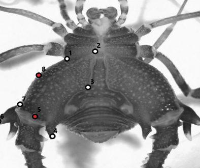 destaca-Arachnida-abril2021
