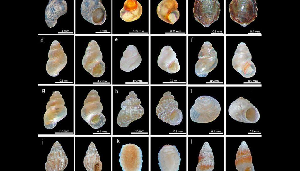 destaca-gasteropodos-mayo2021