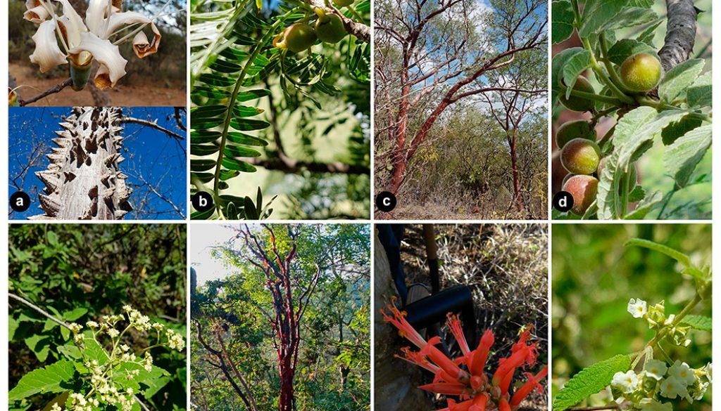 09destaca-tree-tehuacan-ago2021