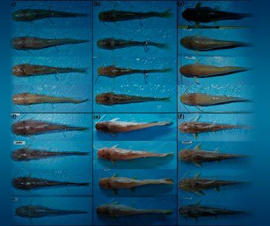 10destaca-troglobitic-catfish-ago2021