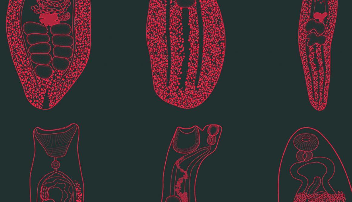 destaca-intestinal-adult-sep2021