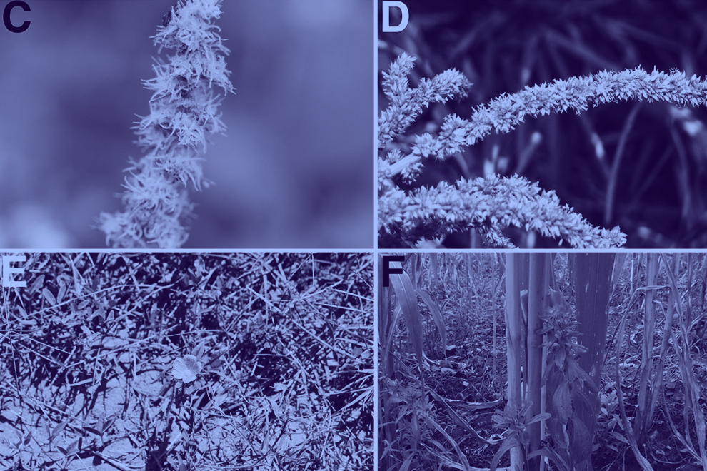 destaca-weeds-commercial-sep2021